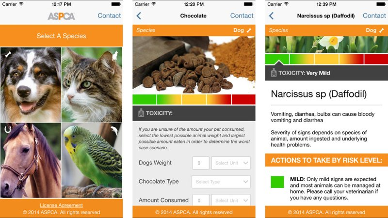 6 Free Must-Have Apps for Pet Owners