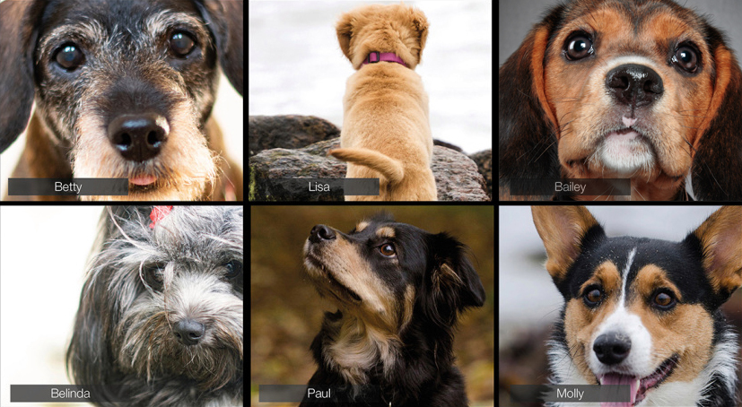 """A composite image shows various dogs on a """"conference call."""""""