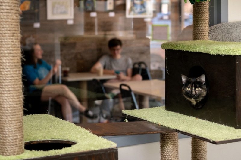 Cat Cafés: New Purrfect Paradises for At-Risk Shelter Cats