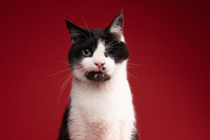 Zombie Cat bart