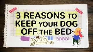 3 REASONS TO KEEP DOG OFF BED